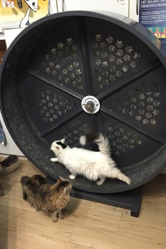 Rad voor katten